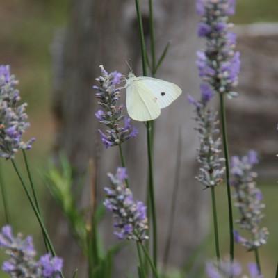 butterflies…